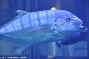 AquaDom 14