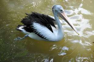 Bali Bird Park 9
